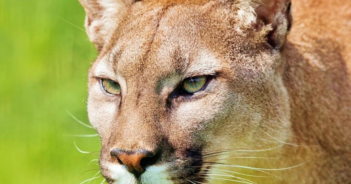 co jsou zdarma cougar seznamky