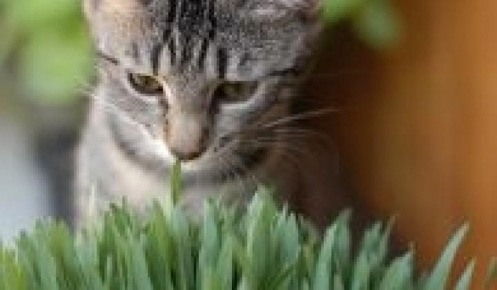 Malinké malé kočička fotky